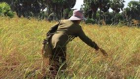 хуторянин Таиланд видеоматериал
