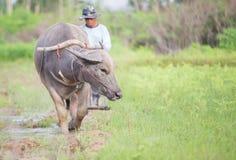 хуторянин тайский Стоковое фото RF