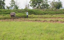 хуторянин тайский Стоковые Фотографии RF
