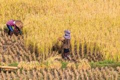 хуторянин тайский Стоковые Фото