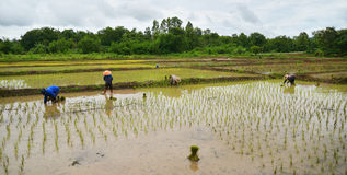хуторянин тайский Стоковое Фото