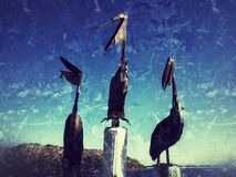 Художественное произведение пеликанов Стоковое фото RF