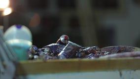 Художник крася трубки фотосъемки краски масла других цветов сток-видео