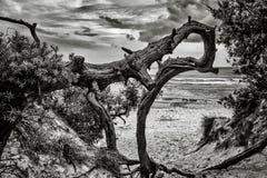 художническая природа Стоковое фото RF