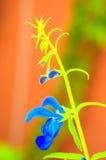 Художническая съемка голубого цветка стоковые фотографии rf