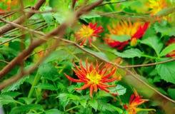 Художническая съемка красного цветка стоковое изображение rf