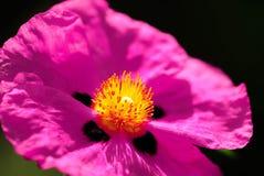 Художническая съемка фиолетового цветка стоковая фотография rf
