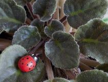 Художнический красный ladybug на реальных листьях, осматривает сверху Стоковые Изображения