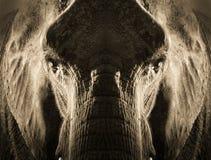 Художнический симметричный портрет слона в тоне Sepia с драматическим backlighting Стоковая Фотография