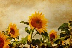 Художнический солнцецвет Стоковое Изображение RF