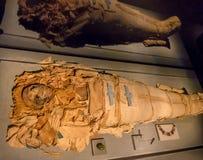 ХЬЮСТОН, США - 12-ОЕ ЯНВАРЯ 2017: Закройте вверх изумительной мумии обернутой с некоторыми ветошами древнего египета в соотечеств Стоковое Фото