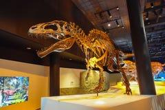 ХЬЮСТОН, США - 12-ОЕ ЯНВАРЯ 2017: Ископаемый t-rex динозавра, самое изумительное depredator динозавра того времени, в a Стоковое Изображение