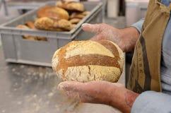 Хлебопеки делая handmade ломти хлеба в хлебопекарне семьи формируя тесто в tradional формируют в Софии, Болгарии на сентября Стоковое Фото