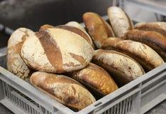 Хлебопеки делая handmade ломти хлеба в хлебопекарне семьи формируя тесто в tradional формируют в Софии, Болгарии на сентября Стоковое Изображение RF