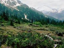 Хлебопек вдоль следа Энн озера, Mt луга и держателя Глушь хлебопека, северный национальный парк каскада, Вашингтон Стоковое Изображение
