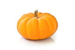 хлебоуборка halloween предпосылки декоративная изолировала белизну символа тыквы Стоковая Фотография