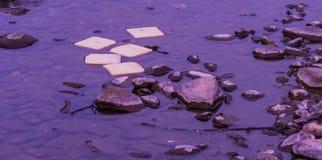 Хлеб в воде Стоковые Изображения
