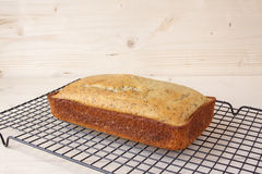 Хлеб макового семенени лимона Стоковое Фото