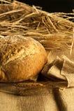 Хлеб с ушами стоковое фото