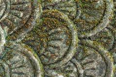 Хлопь штукатурки змея Стоковое Изображение RF
