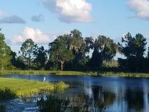 Цапля грея на солнце на озере стоковое фото rf