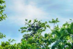 Цапля или egrets или выпи Стоковые Фото