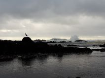 Цапля и волны большой сини Стоковая Фотография RF