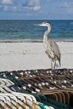 цапля пляжа Стоковое Изображение RF