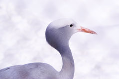 цапля птицы Стоковые Фотографии RF