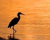цапля wading Стоковые Фотографии RF