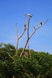 Цапли или egrets стоя на дереве Стоковое фото RF