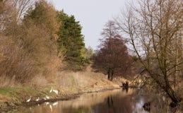 Цапля в перепаде реки стоковое изображение rf
