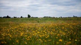 Цапля в поле Стоковые Изображения RF