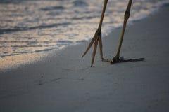 Цапля идет вдоль пляжа стоковое фото rf