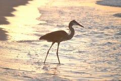 Цапля на пляже Стоковые Изображения