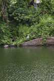 Цапля стоя над рекой Стоковые Изображения RF