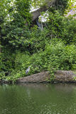 Цапля стоя над рекой Стоковое фото RF