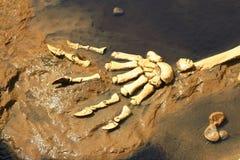 царапает хищника доисторического Стоковое Изображение
