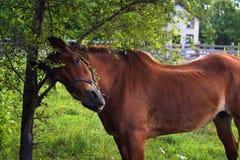 царапать лошади Стоковые Фотографии RF