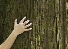 царапая ствол дерева руки Стоковые Фотографии RF