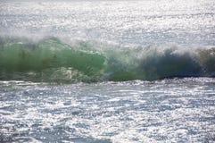 Цаца Индийского океана Стоковые Фотографии RF