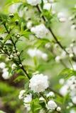Цвести белых цветков стоковые изображения
