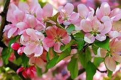 Цвести весны стоковое фото rf