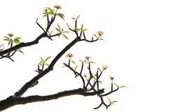 цвести ветвей стоковые изображения rf