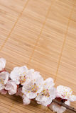 цвести ветви Стоковое фото RF