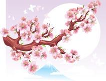 цвести ветви Стоковые Изображения RF