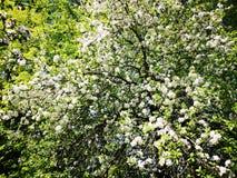 Цвести в старом саде стоковые изображения rf