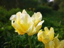 Цвести в старом саде стоковые фото