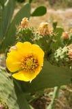 цвести кактуса clumy цветет рост как новые стороны малые Стоковое Фото