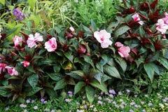 Цвести красочные flowerbeds в парке города лета стоковое фото